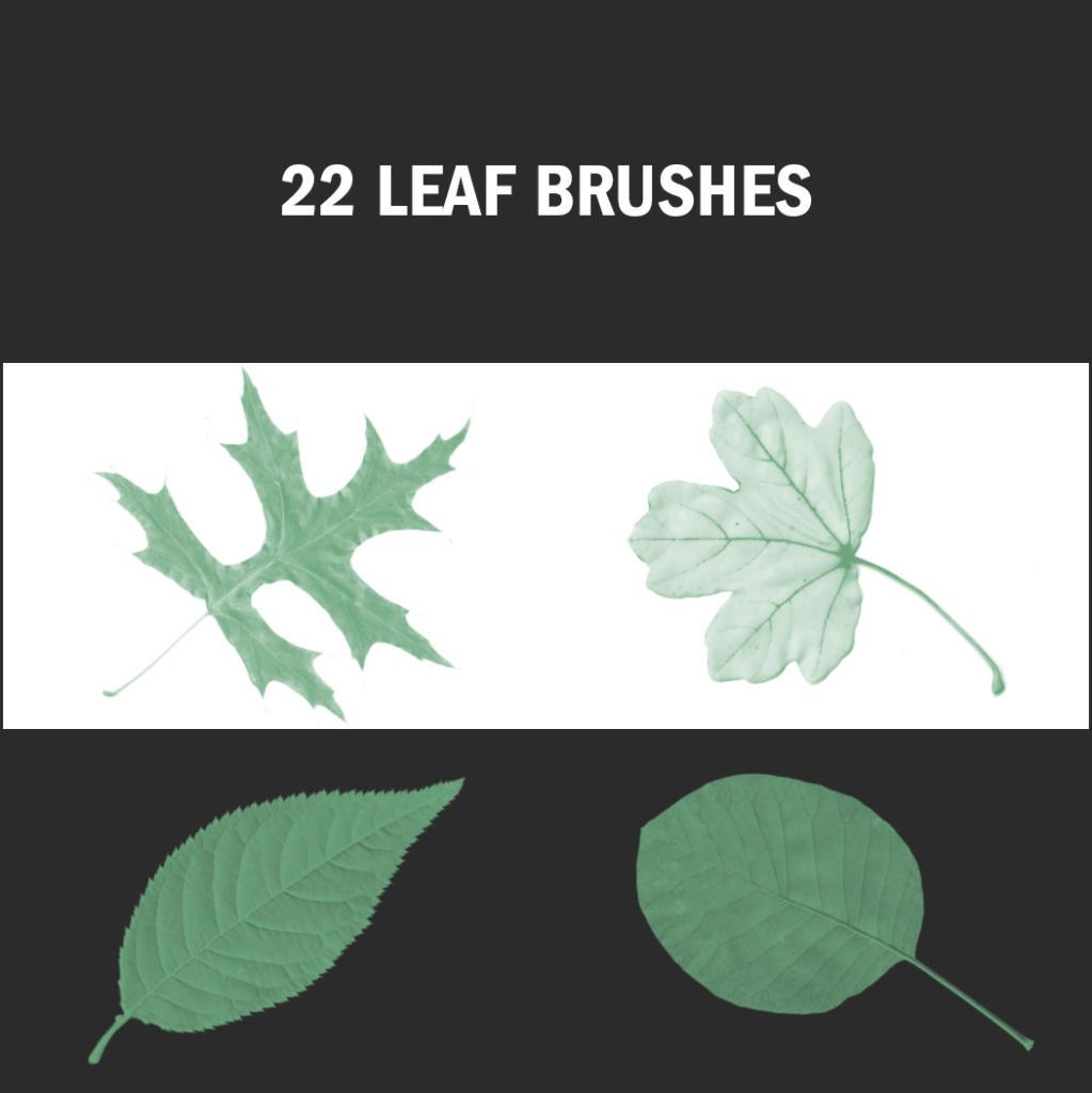 Herbstliche Designs lassen sich mit diesen kostenlosen Leaf Brushes erstellen.