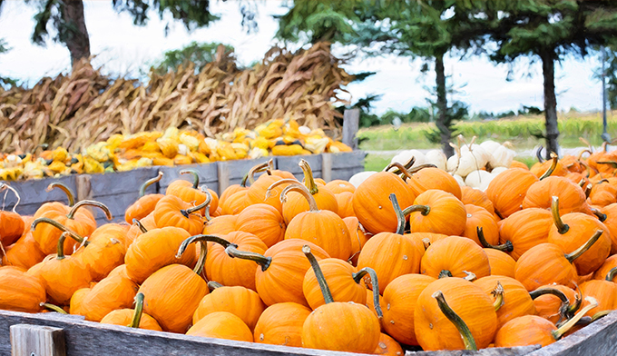 Inspirierende Herbst Farbpaletten Fur Kreative