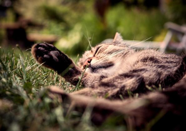 Makro Katze